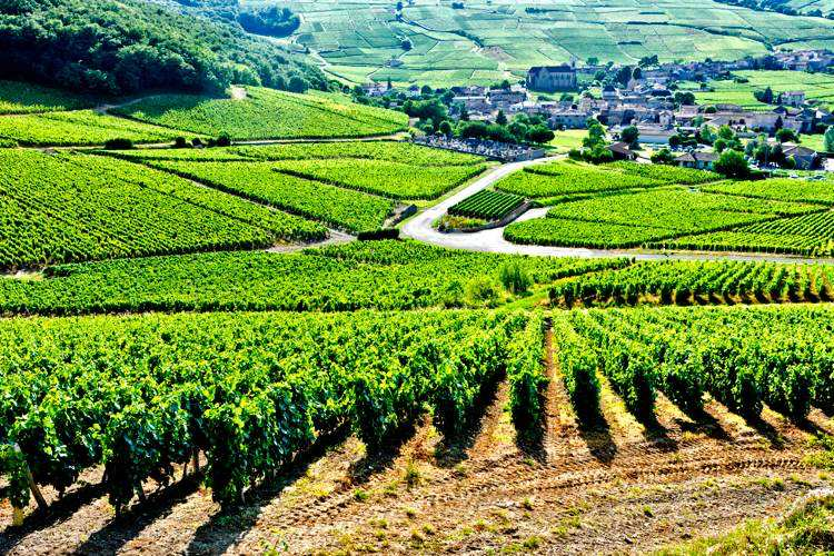 Burgundy Tour from Paris