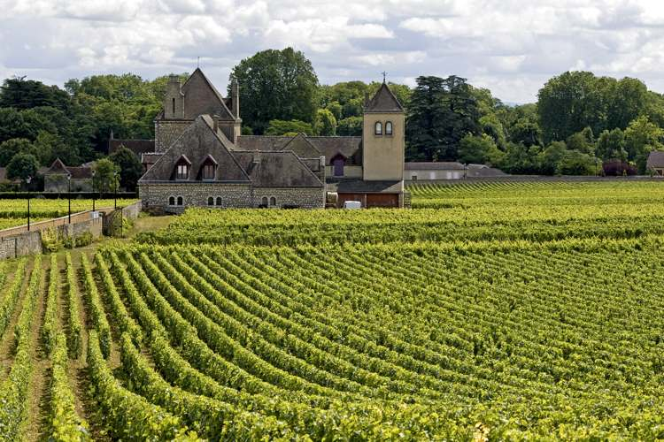 Wines and Foods of Burgundy